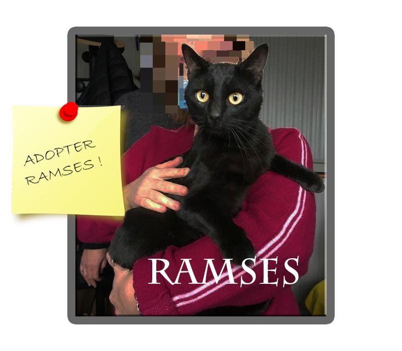 RAMSES chat à bras
