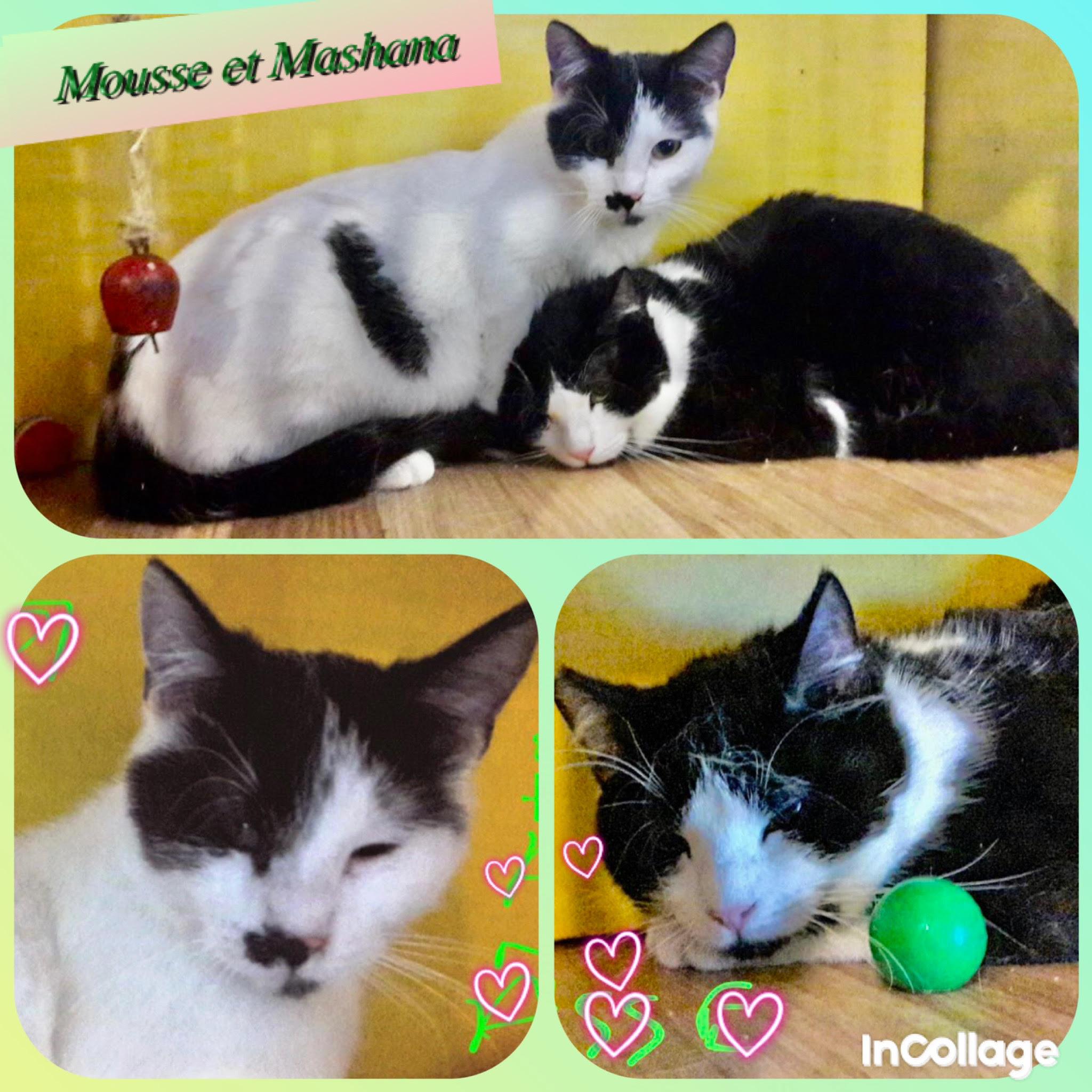 Mousse et Mashana : SOS !