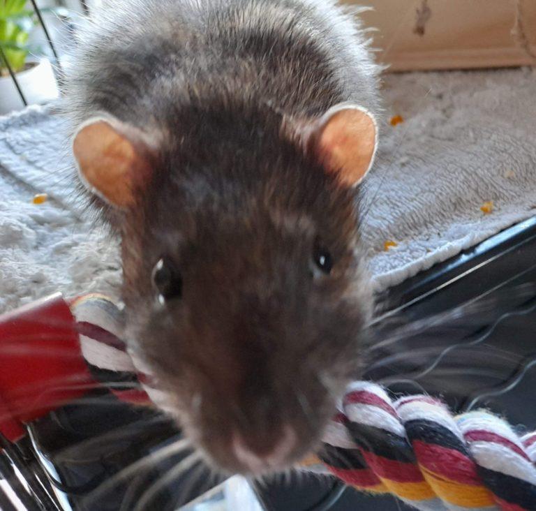 Ratatouille (réservé)