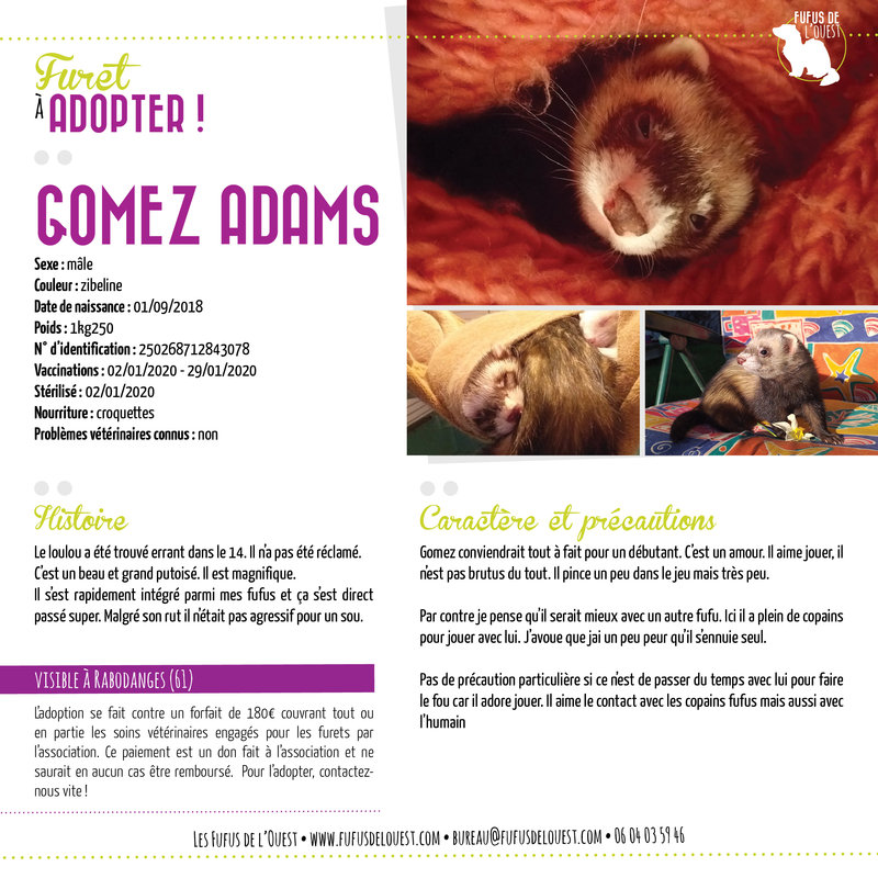 GOMEZ ADAMS
