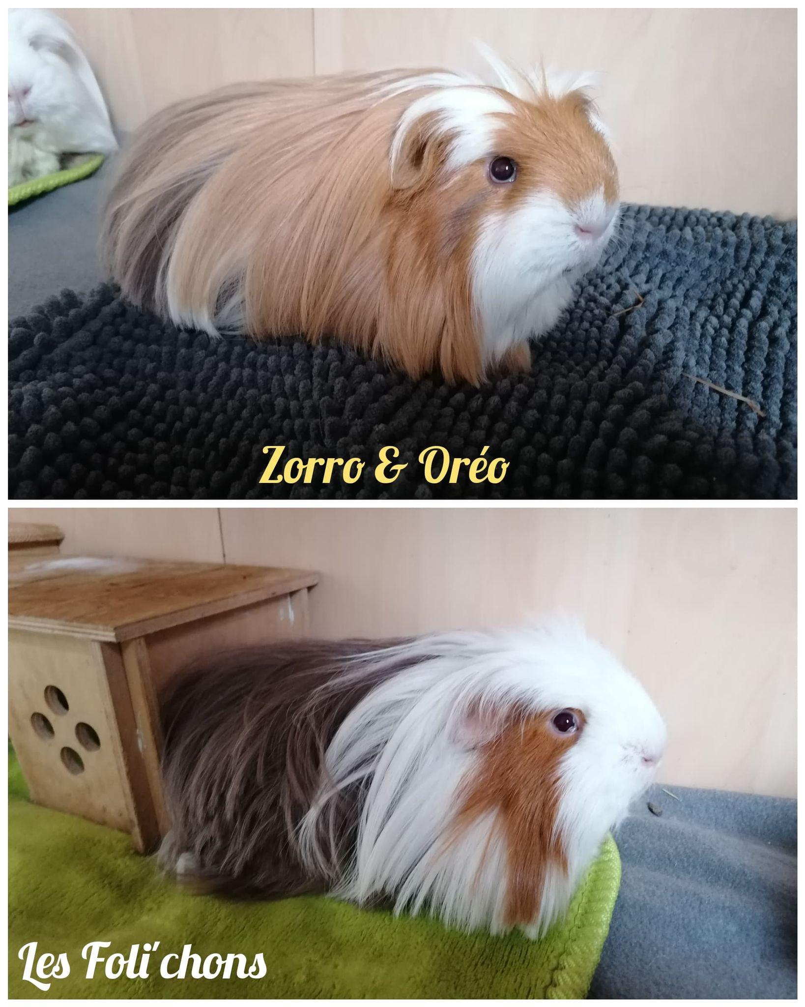 Zorro & Oréo