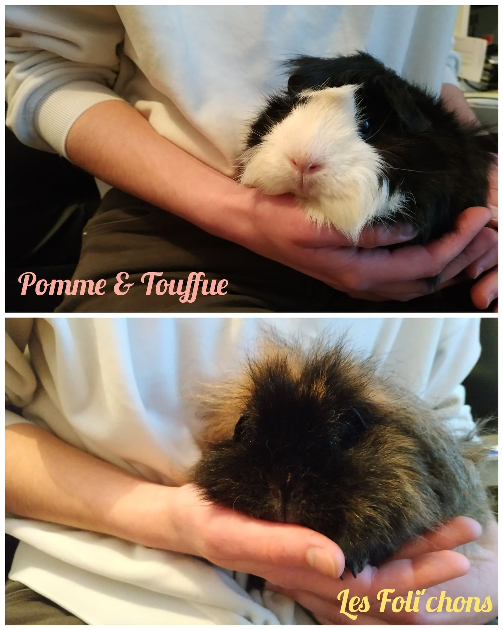 Pomme & Touffue