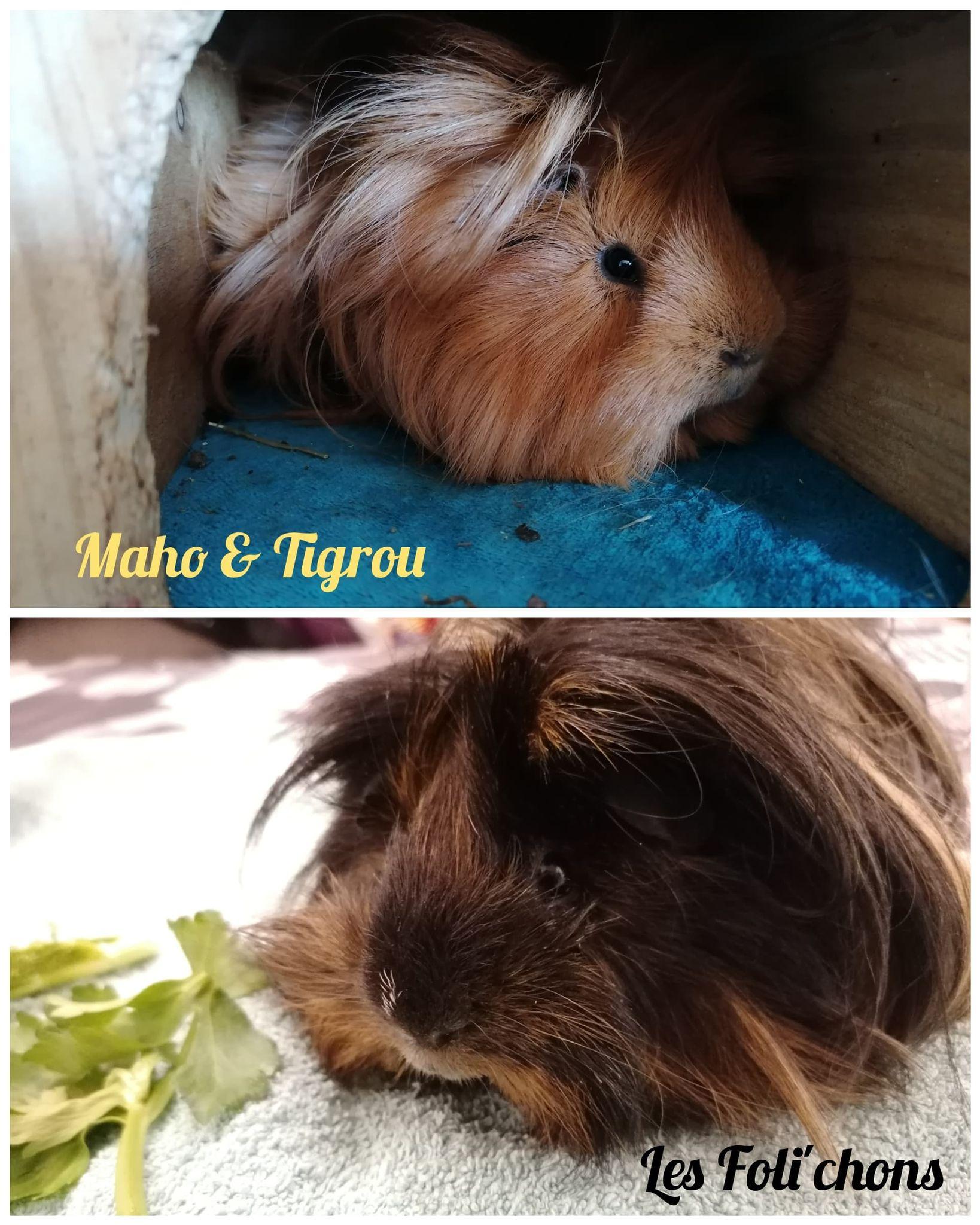 Winny & Maho