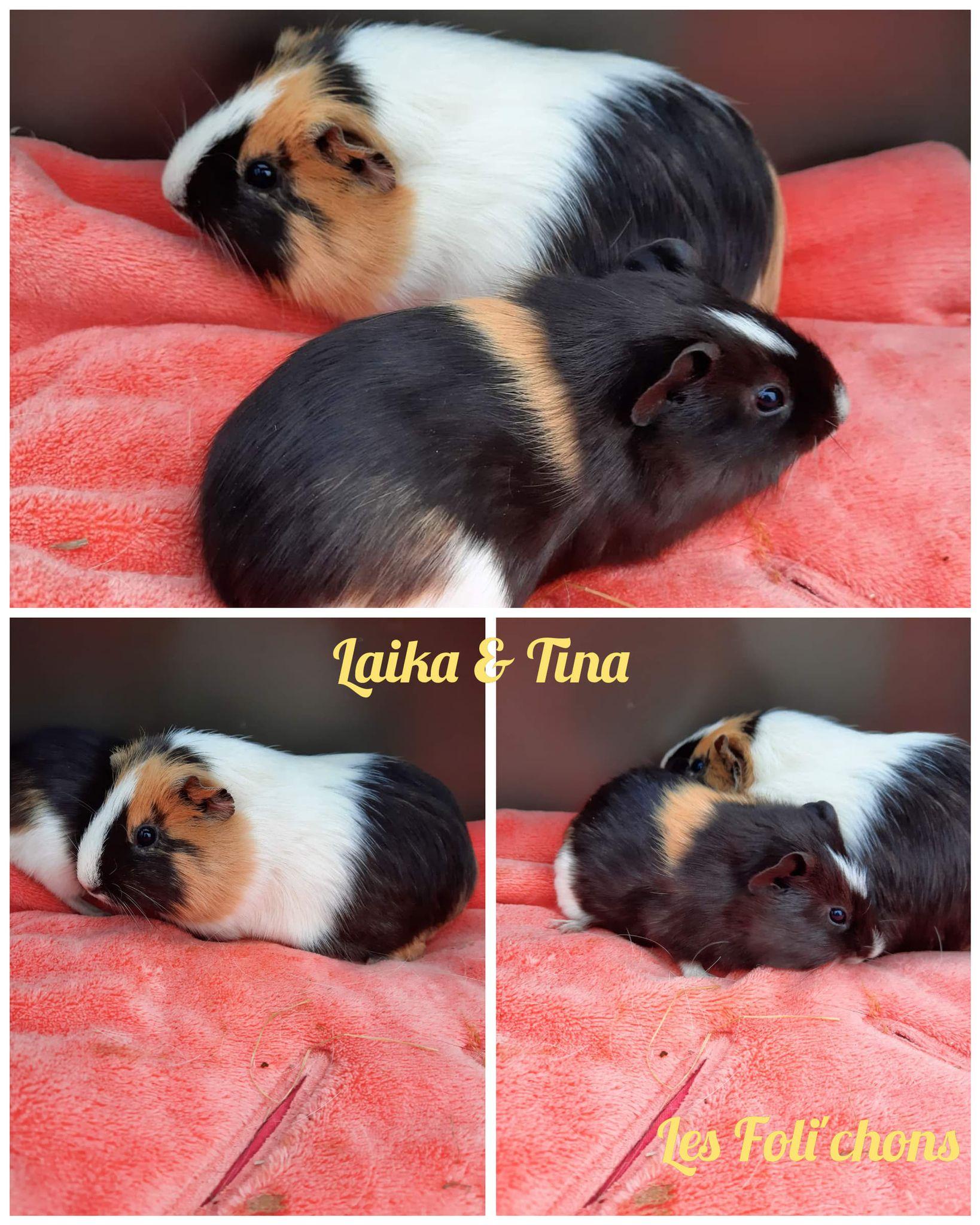 Laika & Tina