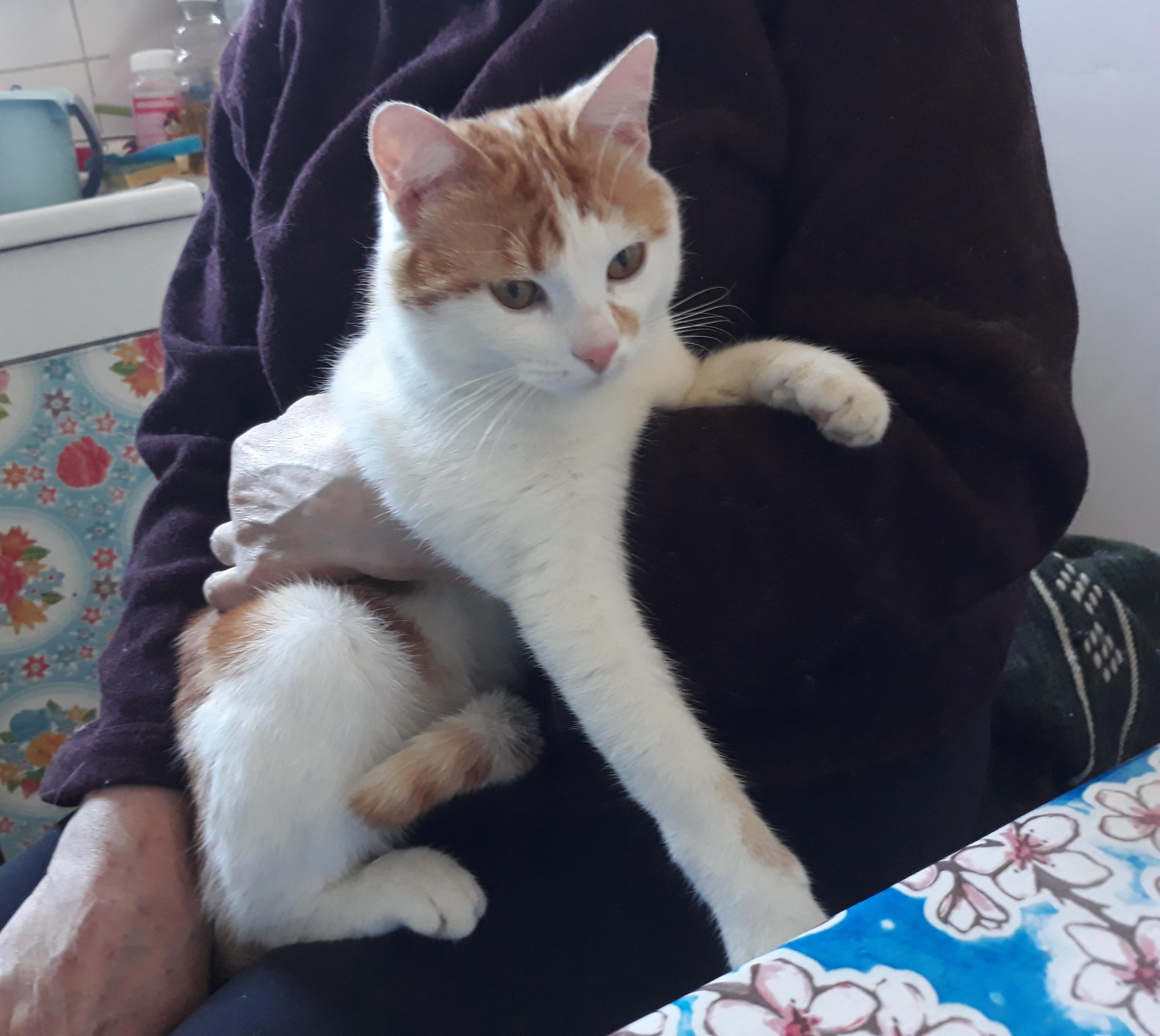 GROS SOS : jeune chat roux et blanc recherche famille avec jardin