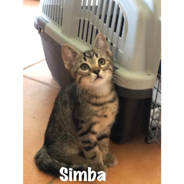 SCHTROUMPFETTE et SIMBA