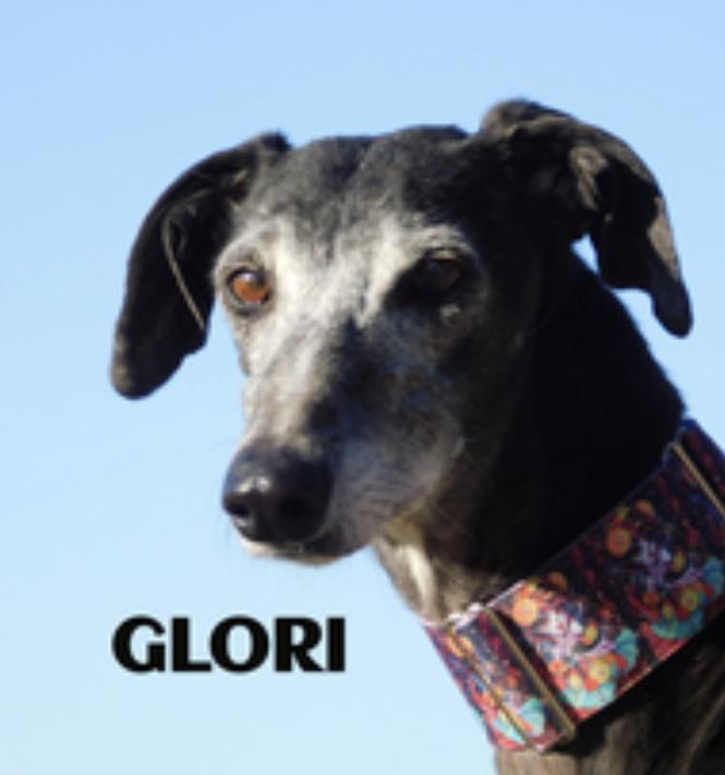 Glori