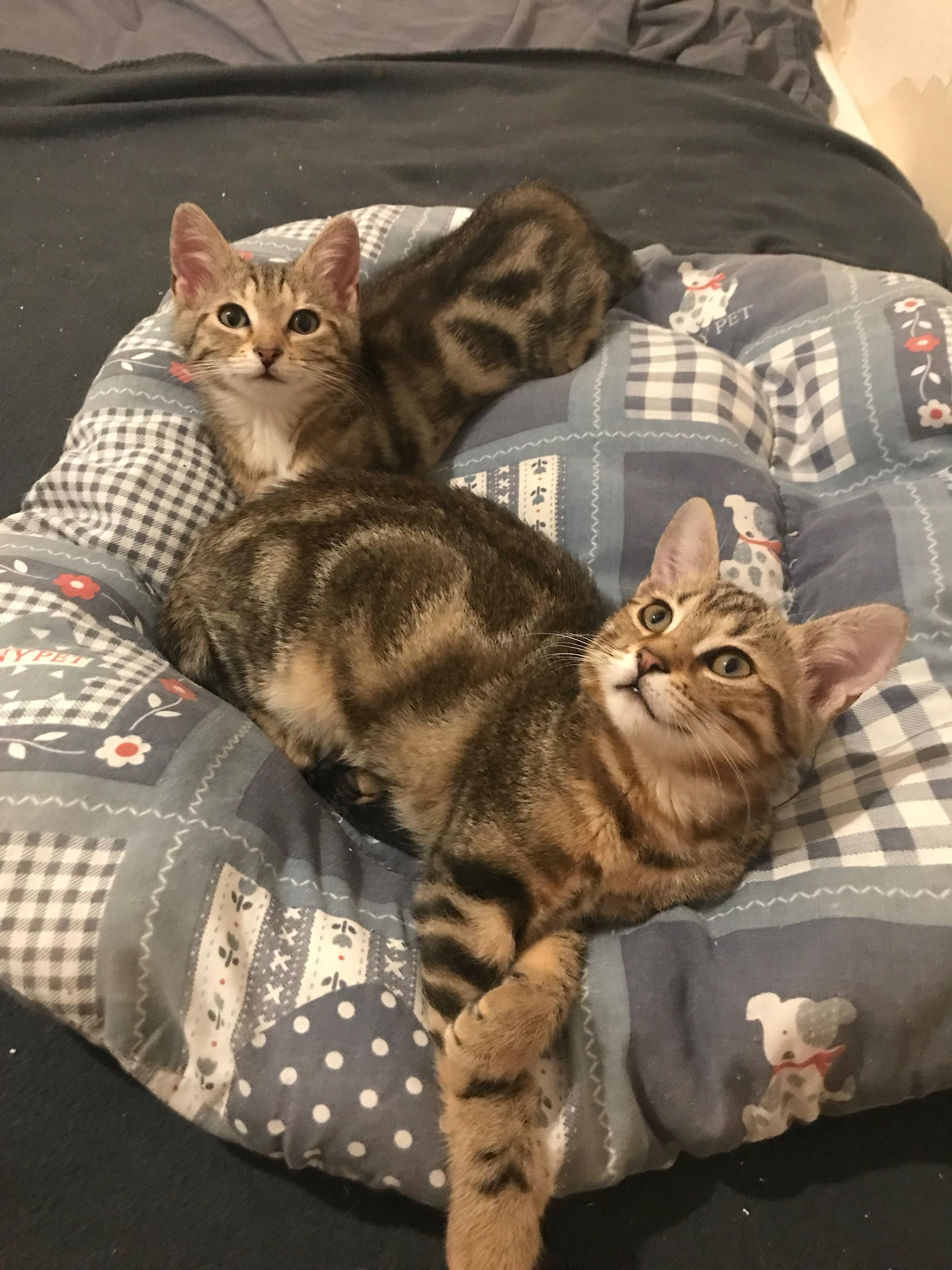 Sacha (femelle de 5 mois)  et Milos (mâle 4 mois)