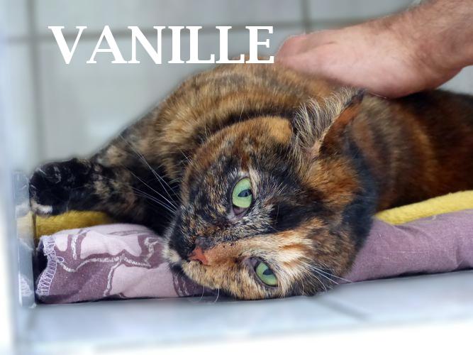 Belle et douce Vanille