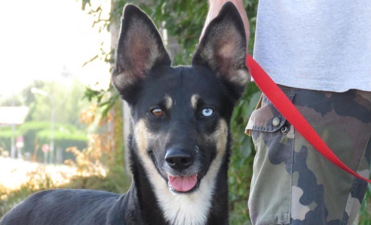 Adoption de Aya: Moyen chien race indéfinie, région Centre