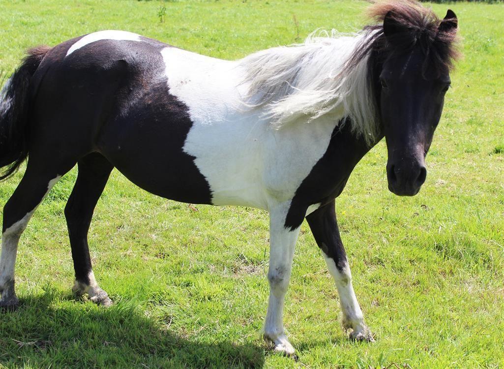 Adoption De Voltige Petit Cheval Double Poney Region Basse Normandie