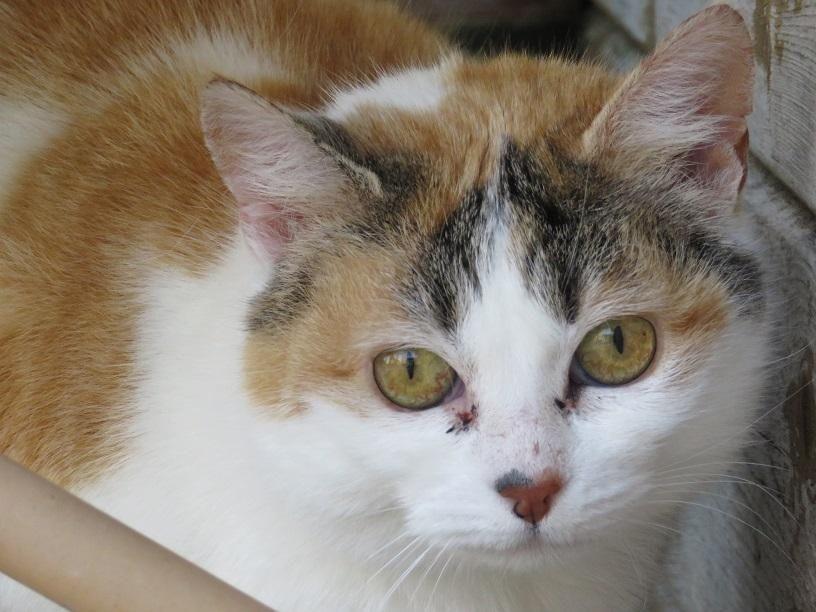 Adoption chien adoption chat et adoption tous animaux de - Salon des deux rives ...