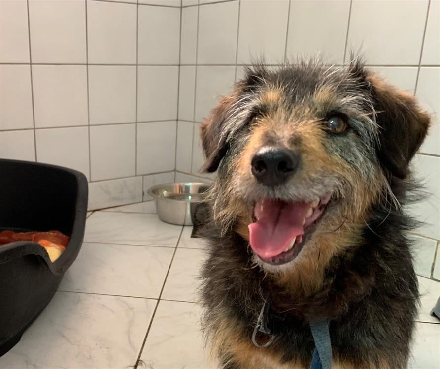 PRINCE - x jagd terrier 7 ans - Spa de Cliron (09) C31ff6312c9b616c25aedf4161d1c2bd
