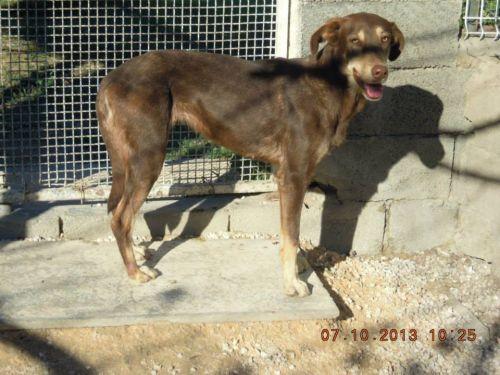 IONA - berger 10 ans (5 ans de refuge)  ASCPA à Perpignan (66) 500_cbfd26847df490bc8f8f7dbcff0f9d8a