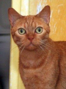 Garfield à parrainer
