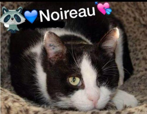 Noireau