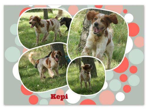 KEPI - epagneul 6 ans  (4 ans de refuge)  - Refuge de l'Esperance à Orange (84) 500_5106e35b717b9a9f86d91f07a61bdaf7