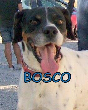 BOSCO LL318