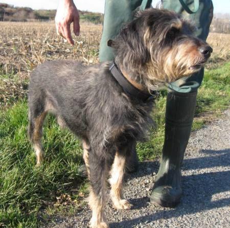 Adoption de 14567 tequilla moyen chien labrador r gion midi pyr n es - Salon des animaux toulouse ...