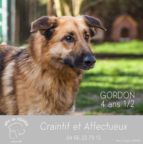 GORDON - x ba 9 ans - Refuge des Murailles à Nimes (30) 500_ea99d70b925b215aabd41091839e875b