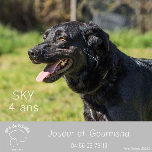 SKYy - x labrador noir 7 ans (4 ans de refuge) - Refuge Spa  Les Murailles à Nimes (30) 500_d26b06dfbbeef7346ae0ce6bf38eb66f
