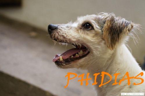 PHIDIAS - x jack russel 11 ans - Spa de Forbach (57) 500_4bce343538049df32657acfe3e8aa5ca