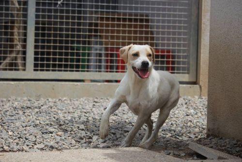 adoption de bianca moyen chien chien crois moyenne race. Black Bedroom Furniture Sets. Home Design Ideas