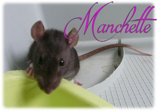 Manchette & Rubis