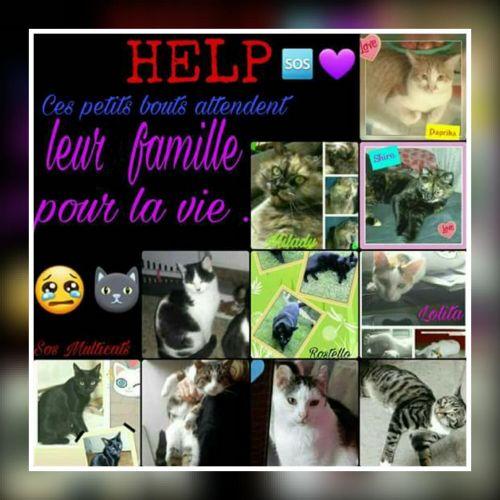 Appel chats mâles et femelles à l'adoption !