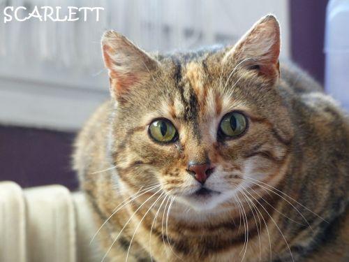 SCARLETT♥