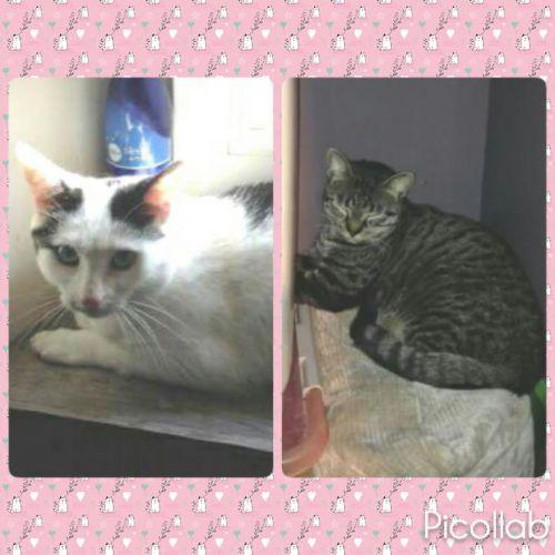 Titi et Minou : TRES urgent !