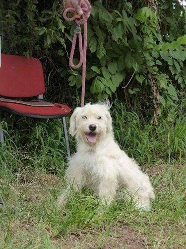 adoption de romeo petit chien chien crois petite race r gion nord pas de calais. Black Bedroom Furniture Sets. Home Design Ideas
