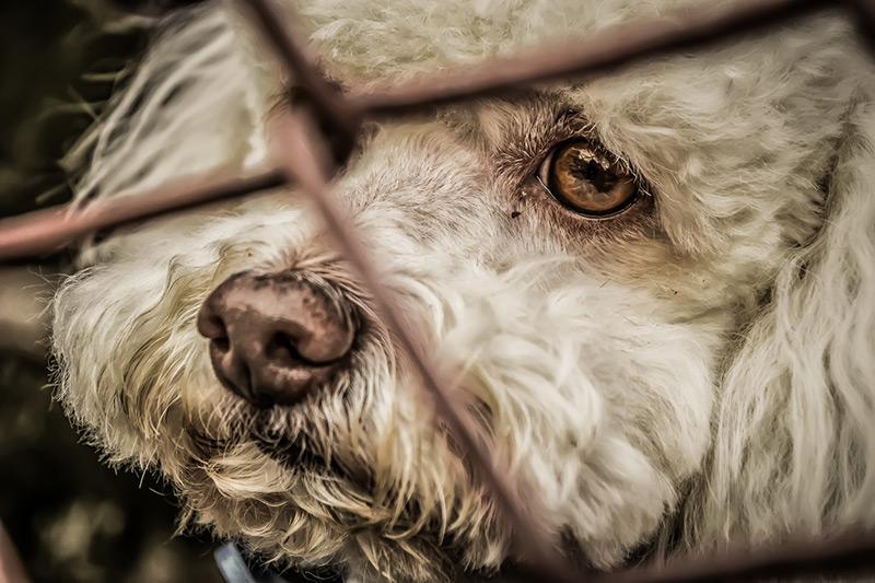 Qui contacter pour dénoncer un cas de maltraitance animale ?