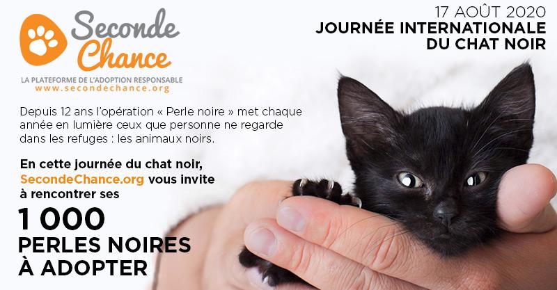 Journée internationale du chat.noir