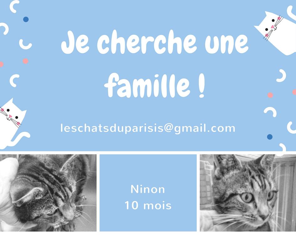 Sos Ninon 10 mois recherche une famille dans le Val d'Oise