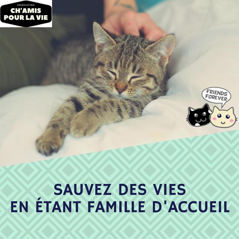 Recherche familles d'accueil sur Toulon et environs