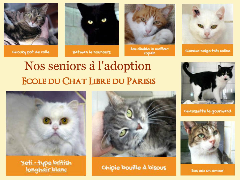 Nos chats seniors à l'adoption