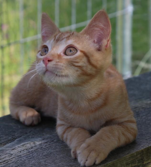 Adoption chats et chatons MAGNIFIQUES