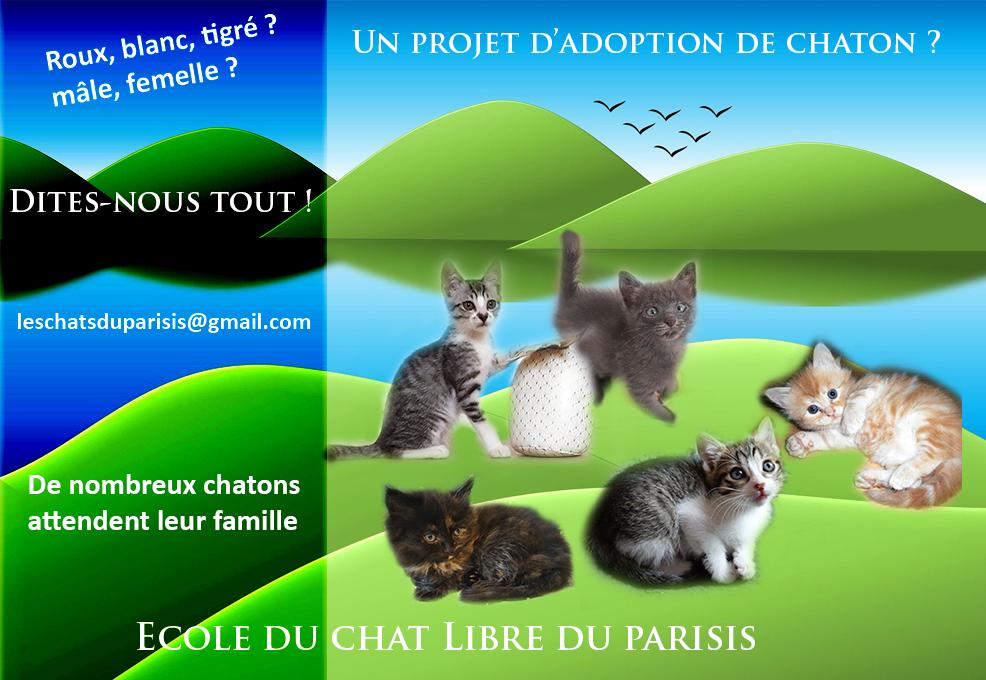 Nous avons des chatons à adopter, choisissez le vôtre !