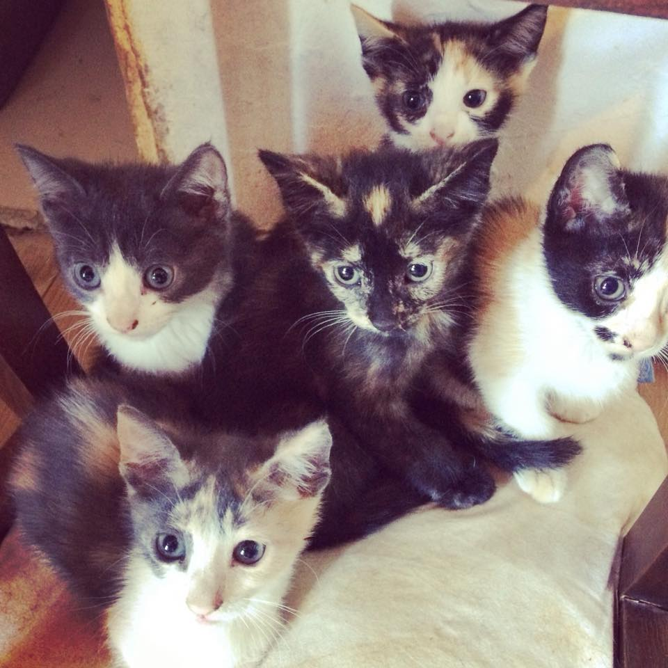 5 Adorables chatons à adopter