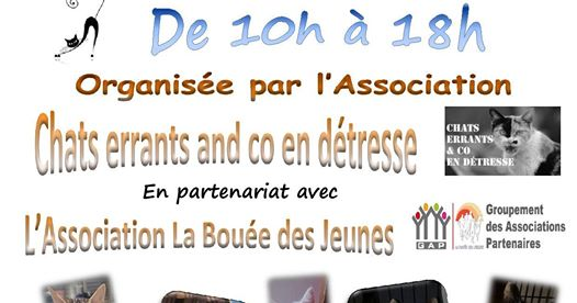 JOURNEE ADOPTION CHATS ET CHATONS
