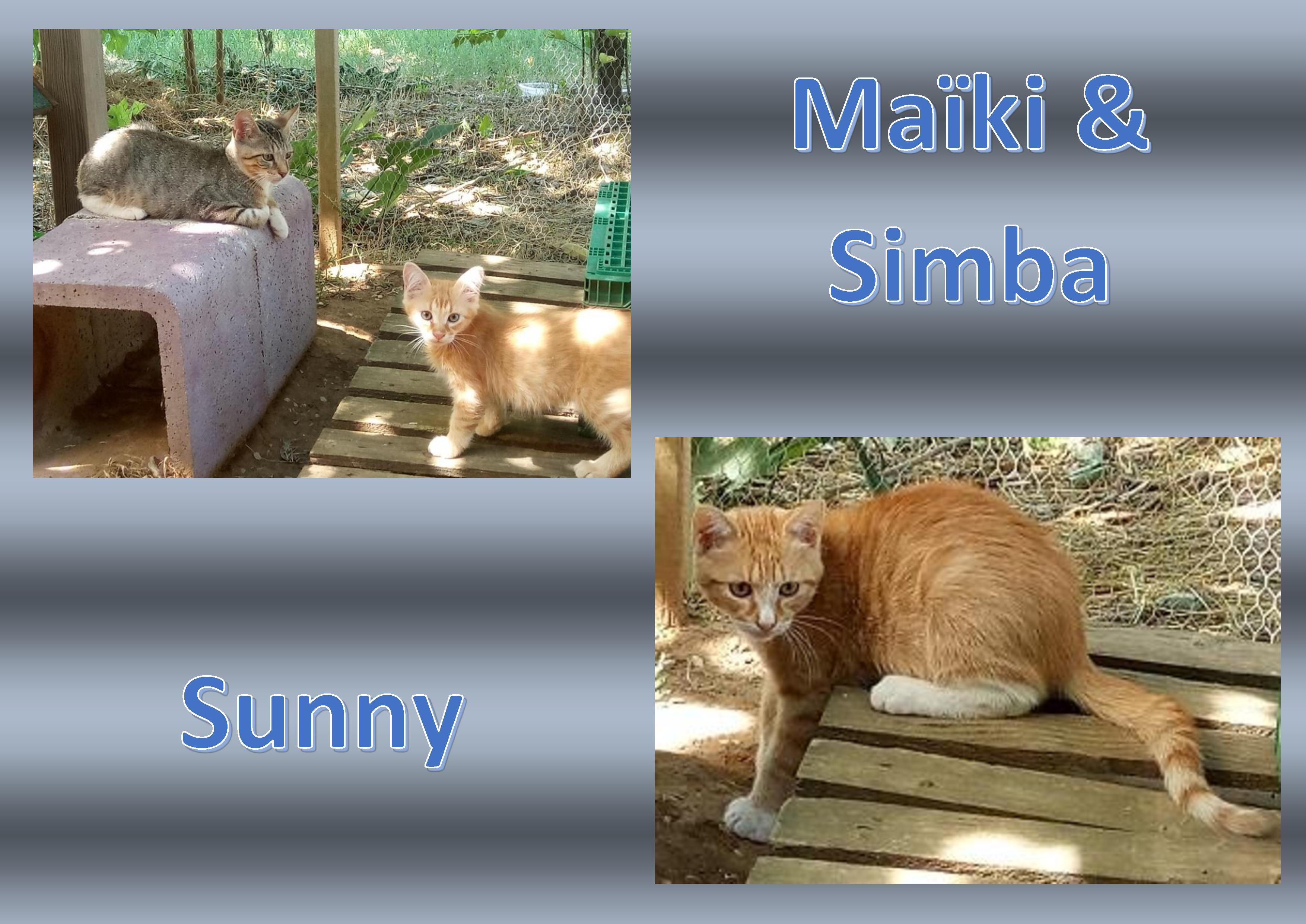 *** URGENCE *** Nous recherchons des Familles d'Accueil pour Simba, Maïki et Sunny