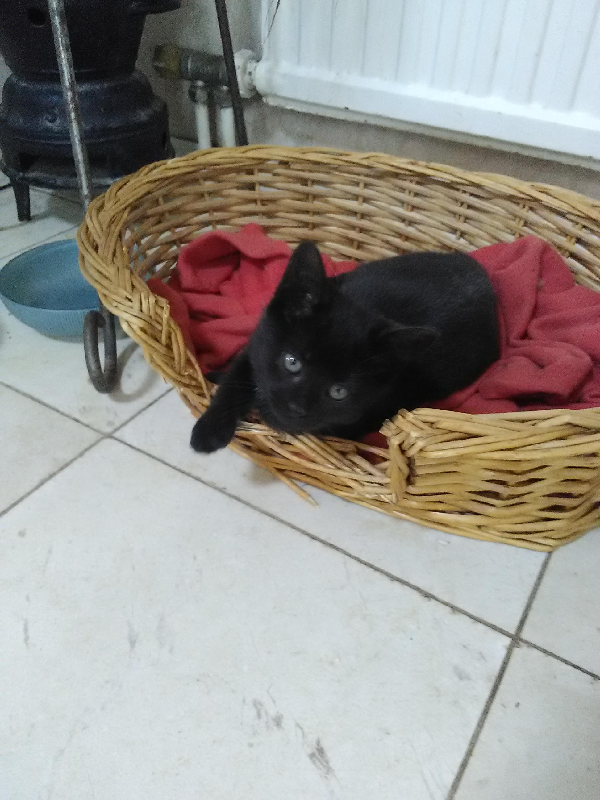 Recherche famille d'accueil temporaire pour chaton