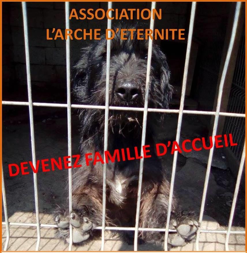 Notre association recherche urgemment des familles d'accueil sur toute la France