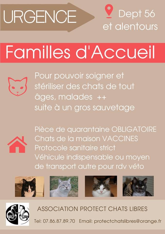 Recherche entraide associations , familles d'accueil, adoptants ...