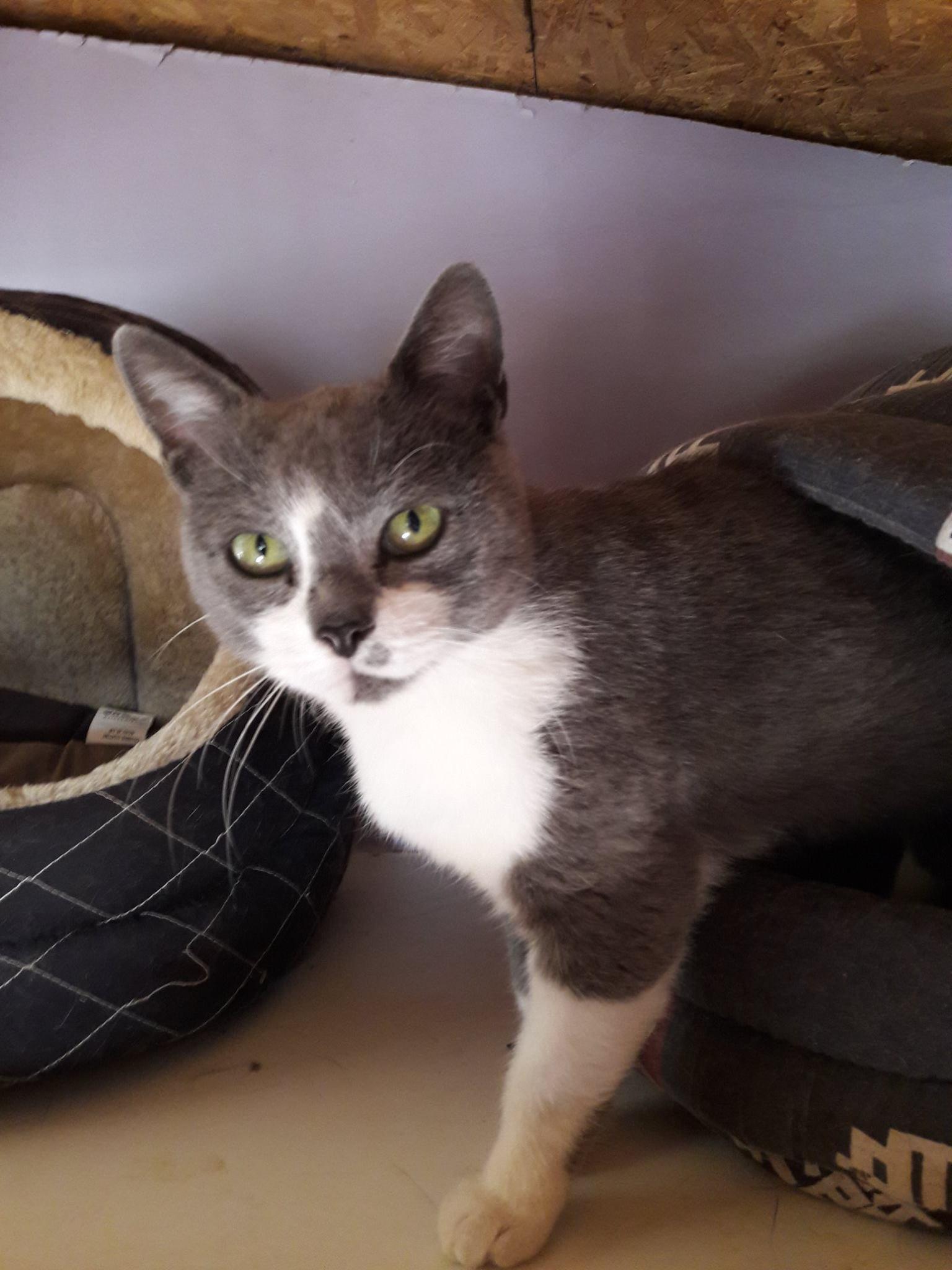 Journée d'adoption - École du chat de Villeparisis - 22 décembre 2018