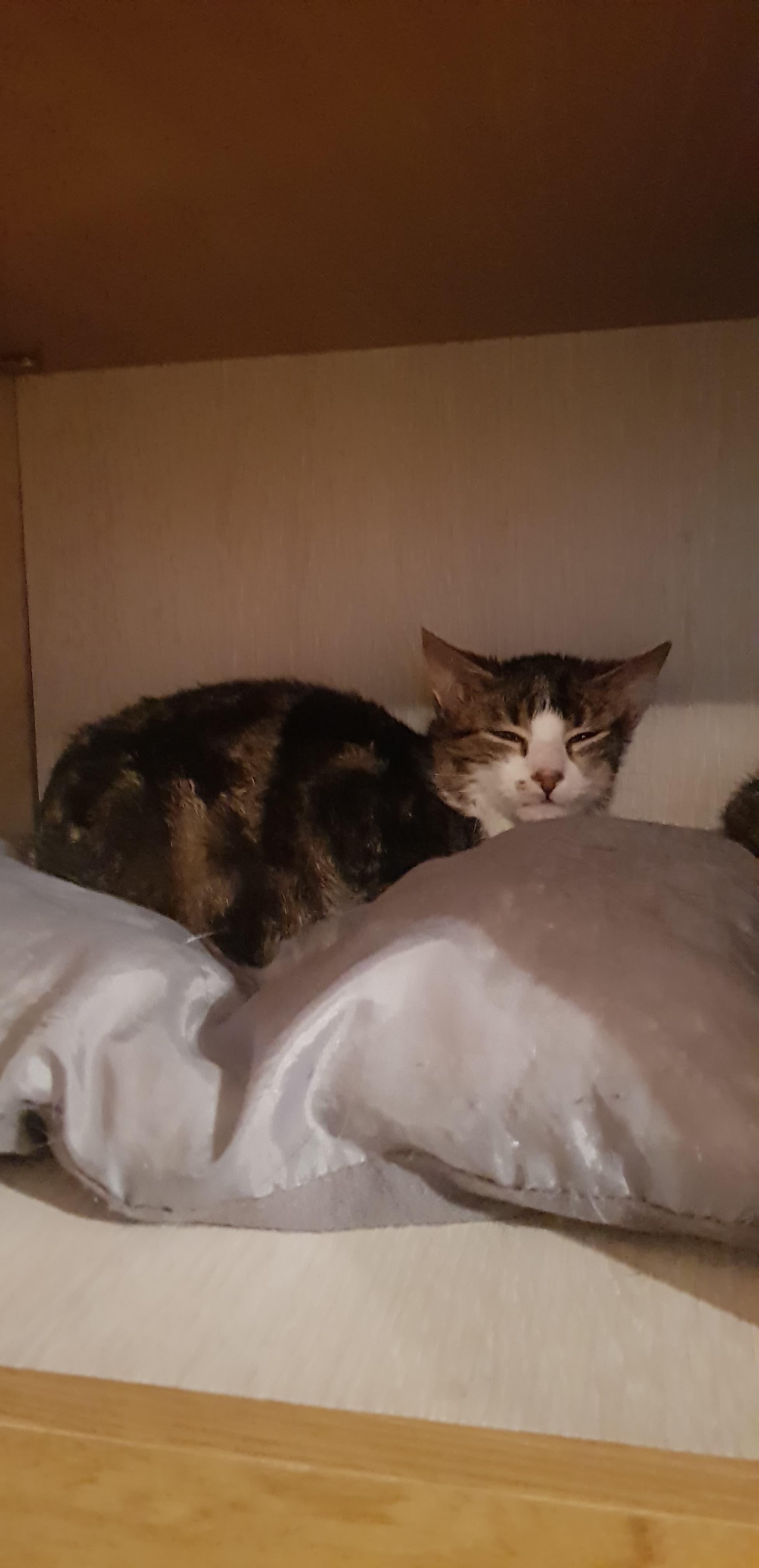 Recherche bénévole pour sociabiliser des chatons
