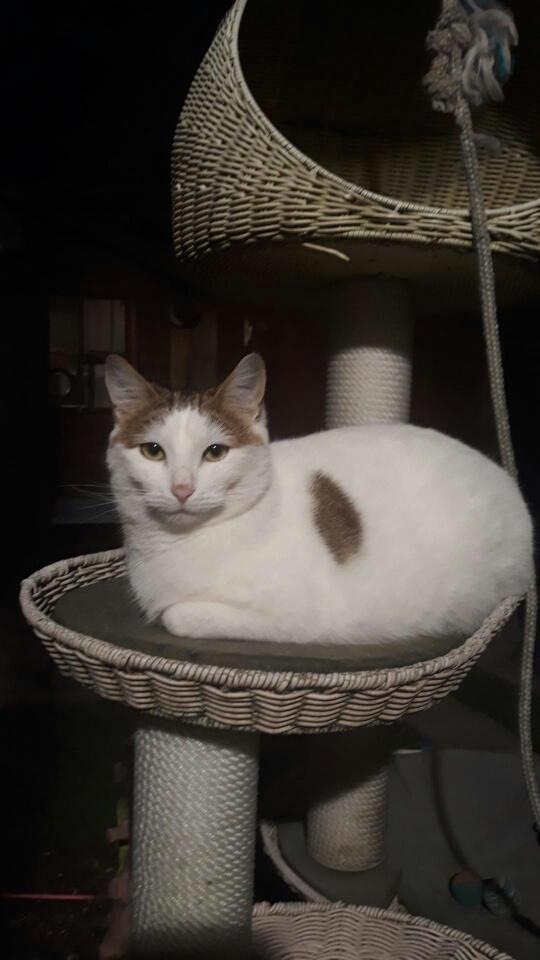 Journée d'adoption - École du chat de Villeparisis - 19 janvier 2019