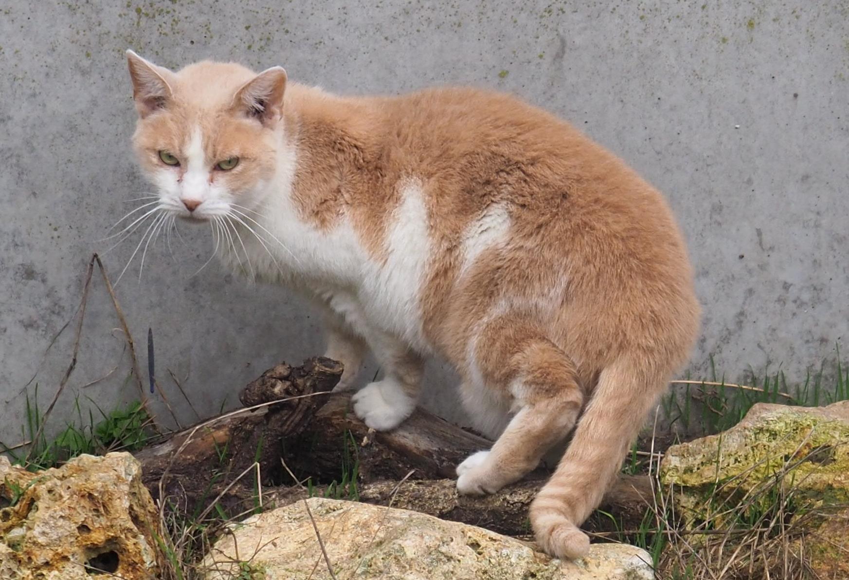 Recherche en urgence familles d'accueil pour chats craintifs à sauver