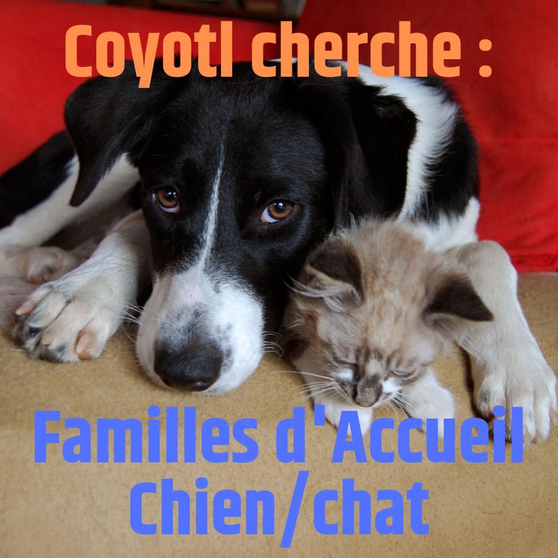 Coyotl cherche des familles d'accueil (FA) pour chien et pour chat, toute la France